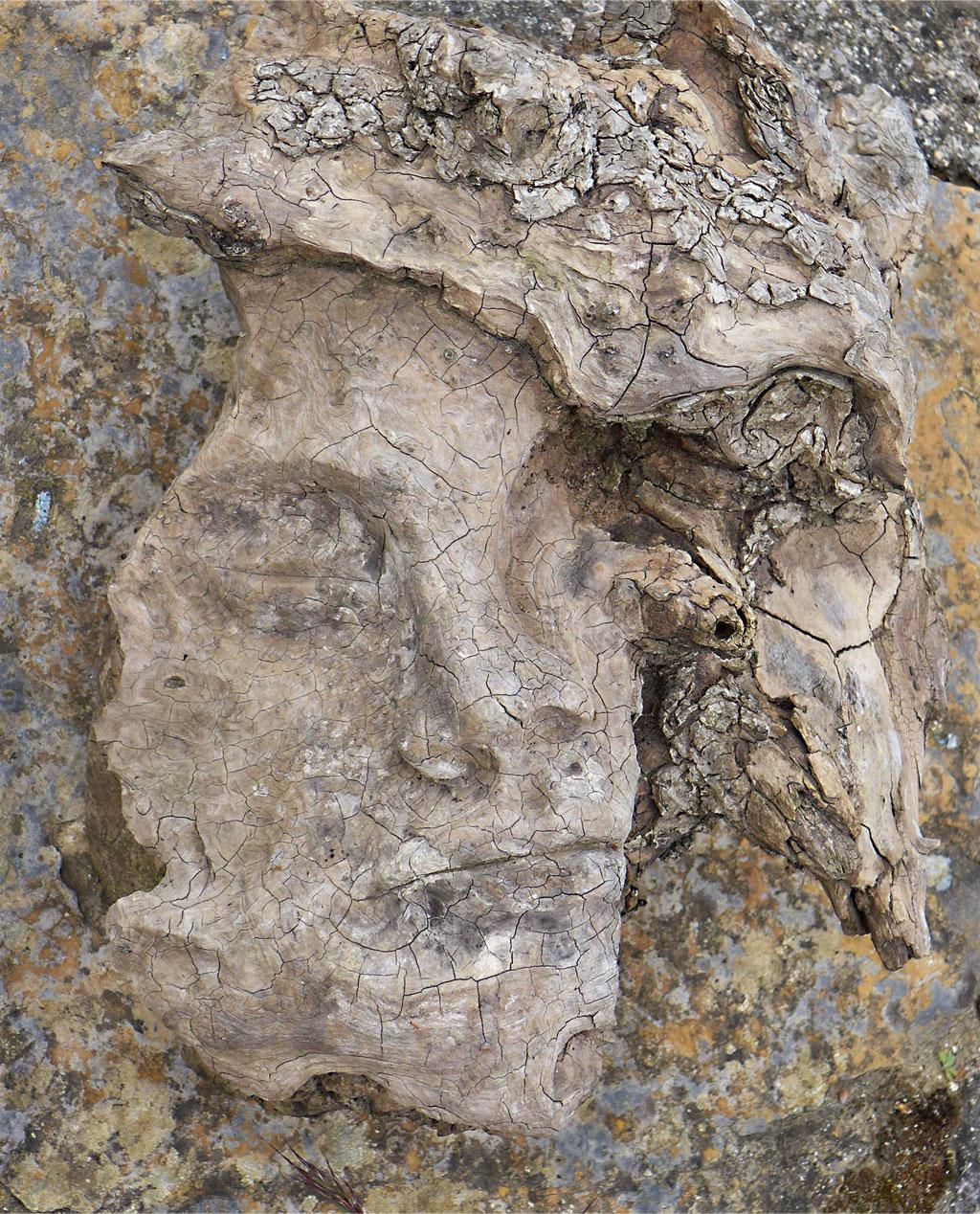 Fragment de racine d'olivier par Raphaël