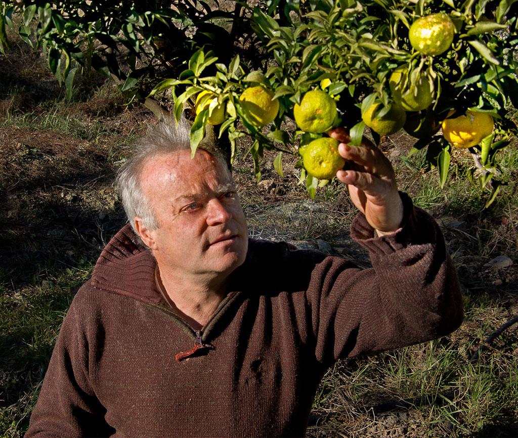 Qui connait Le yuzu ? Le citron employé par les grands chefs, ici le plus vieux de France