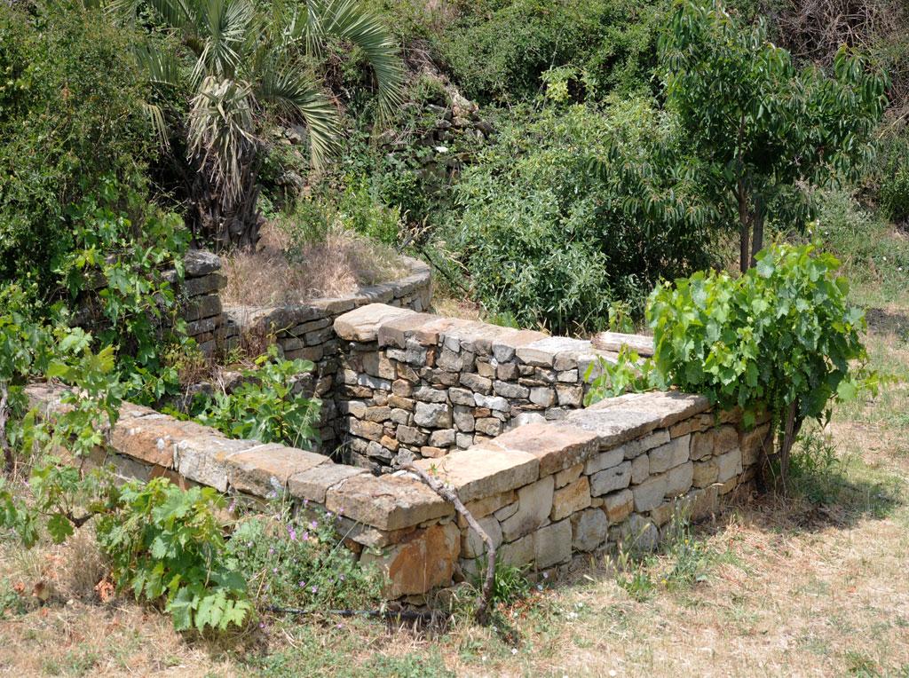 """""""Le jardin d'éden"""" leu de rencontre d'espèces rares, dont une variété de vigne connue depuis des miliers d'années !"""
