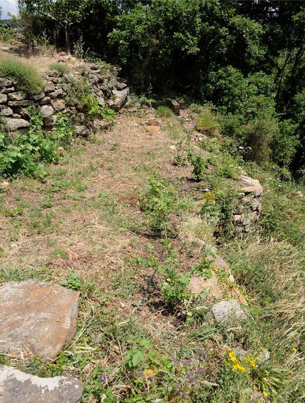 Réhabilitation des terrasses de cultures traditonnelles en Pierre Sèche