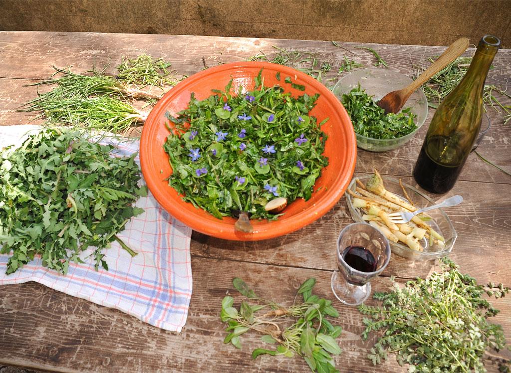 Le Centre de l'Hérault recèle une foule de plantes sauvages comestibles, trésors de bienfaits à l'image de ces salades.