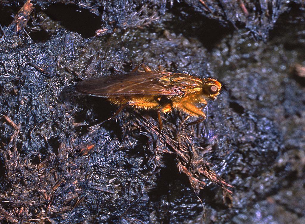 Les mouches décomposent fertilisent et pollinisent