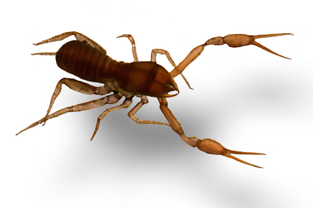 Pseudo-scorpion de 5mm