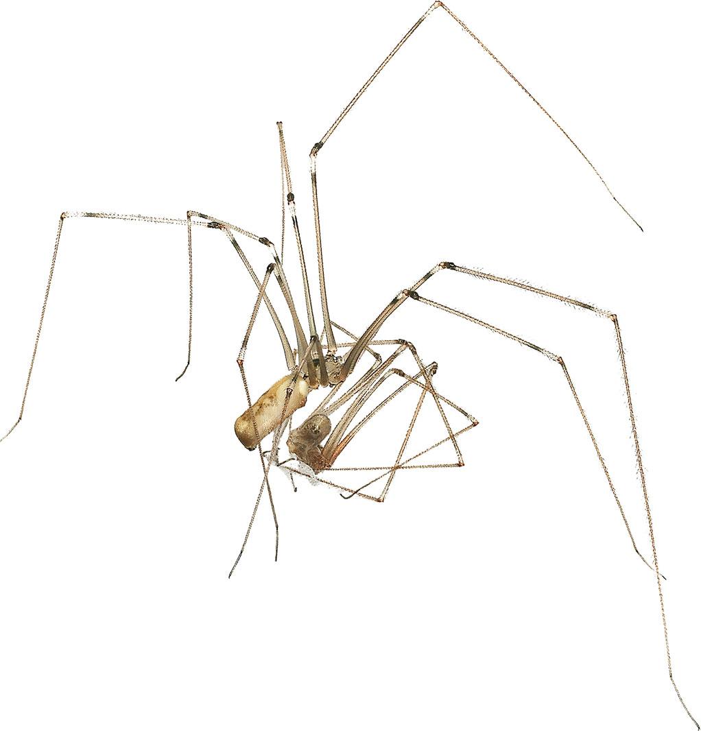 Araignées insectivores