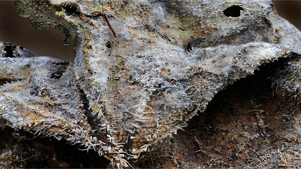 Champignons et moisissures des composts